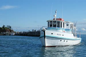 Fish N Trips Boat The Plover